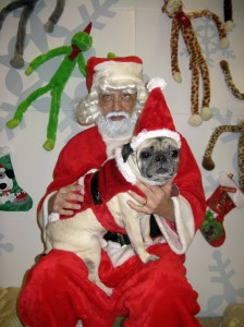 Who's the cutest Santa dog EVER???