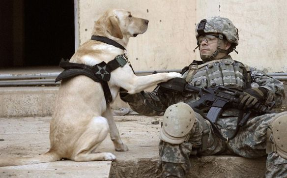 800px-Iraq_dog