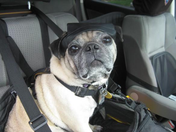 Co-pilot ready