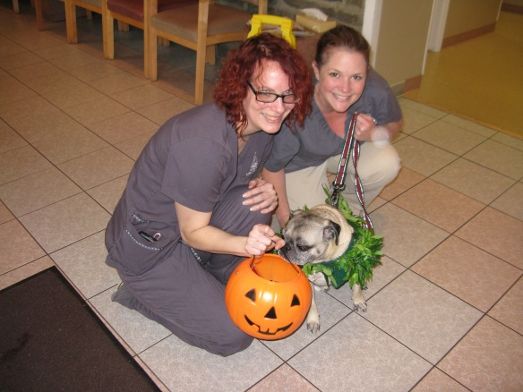 Trick or Treating with Colleen and Erika at Ardmore Animal Hospital.  One more treat mom. PLEEEEEAAAAAAASE. I promise I won't get my head stuck in the pumpkin mom!