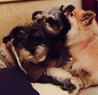 Dingle Berry and Georgie