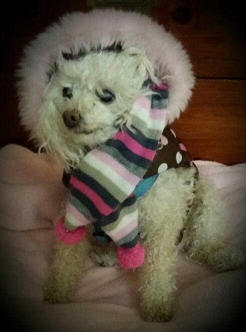 Here's my friend Trixie modeling her winter wear. Isn't she pretty?