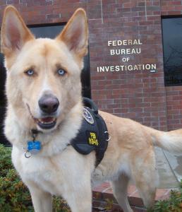 FBI-Animal-Cruely
