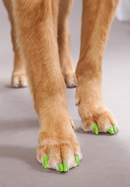 ROYALTY FREE. PETSMART EXCLUSIVE. Pet Expressions shoot at the MDC 11/11 -11/12/14 Neon green nail stickers Video/Photo Releases - Please see David Kless Services Team Contact - Please see Stacy Mendez or Megan Mouser