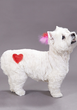 ROYALTY FREE. PETSMART EXCLUSIVE. Pet Expressions shoot at the MDC 11/11 -11/12/14 Heart stencil and pink, white, red feather, valentines day Video/Photo Releases - Please see David Kless Services Team Contact - Please see Stacy Mendez or Megan Mouser